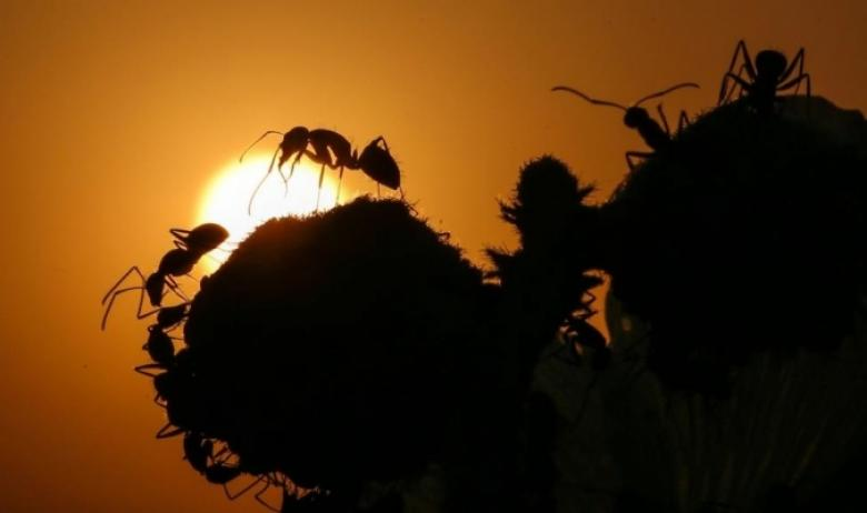 كيف يشم النمل الطريق الصحيح؟
