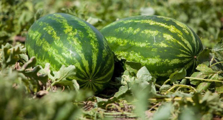 7 فوائد لبذور البطيخ...تعرّف عليها