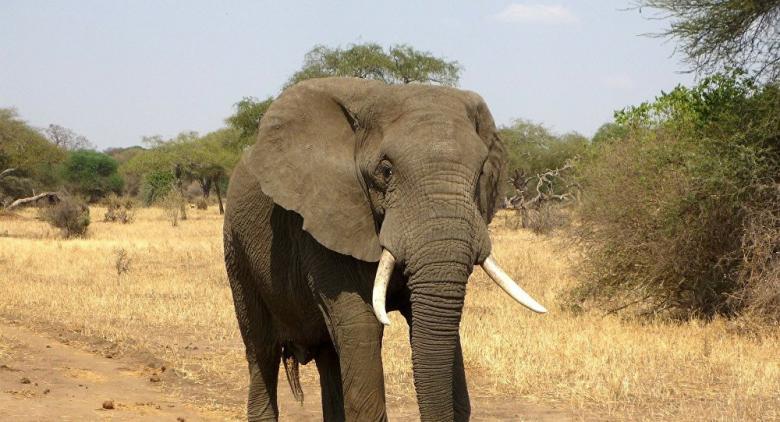فيل يقتل خمسة أشخاص دهسا في الهند