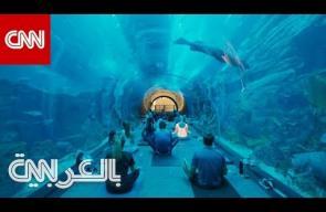 يوغا تحت الماء بين 30 ألف سمكة في دبي