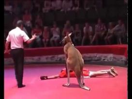 رجل يلعب مع كانجارو ملاكمة