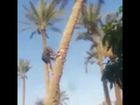 موقف عصيب لرجل فوق نخلة تسقط بعد قطعها
