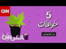 5 خرافات عن البعوض