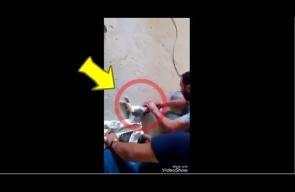 جزائري ينقذ قطة من الموت بعد أن علق رأسها في علبة