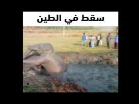 فلاحون في الهند ينقذون فيل صغير سقط في الطين