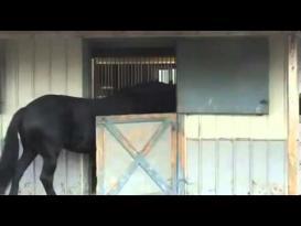 حصان ذكي يفتح الأبواب و يحرر أصدقاءه