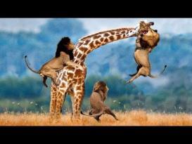 6 معارك بين الحيوانات لا تصدق