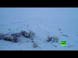 50 دبا قطبيا يشل حركة قرية روسية