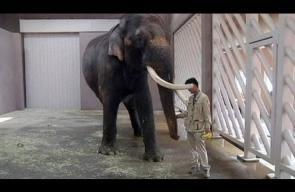 فيل يتكلم الكورية