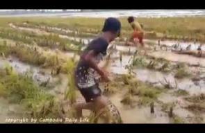صيد الثعابين وبيعها وظيفة الأطفال في جزيرة الملايو