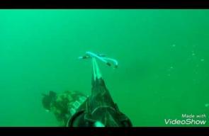 صيد الأسماك بإستخدام بندقية الصيد في بحر غزة