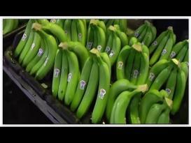 عميلة جني وتعليب الموز