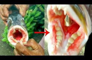 سمكة بأسنان إنسان