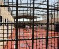 ارتفاع عدد الأسرى المصابين بكورونا في سجون الاحتلال إلى 17