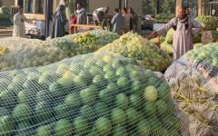 مصر.. الخوف من كورونا يرفع الطلب والسعرعلى الليمون