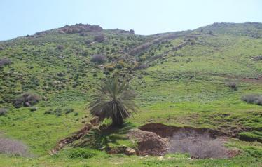 حالة الطقس في فلسطين حتى يوم السبت