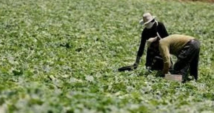 """""""الزراعة"""" تصدر بيانًا بشأن متبقيات المبيدات الحشرية في المنتجات الزراعية"""