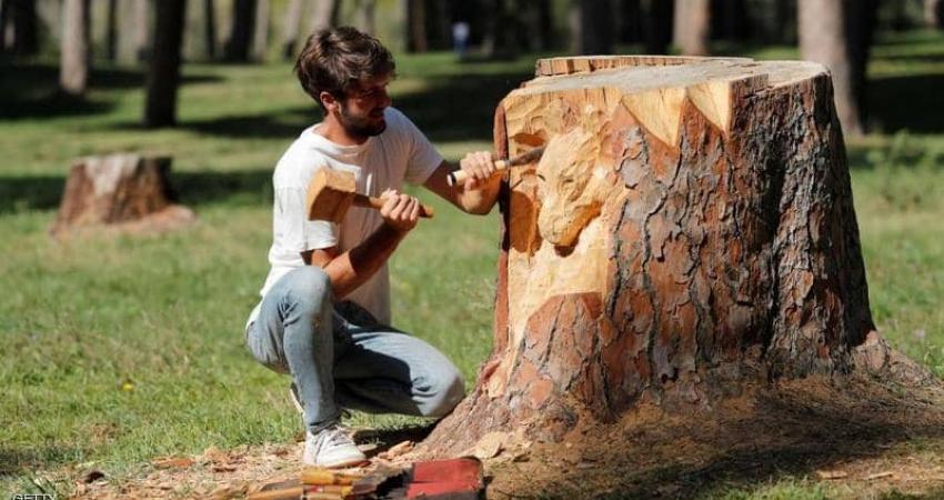 حين تتحول جذوع الأشجار إلى لوحات فنية
