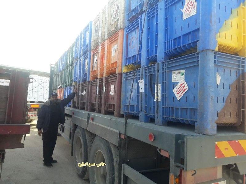 استئناف إدخال الفواكه إلى غزة بعد توقفها لأكثر من أسبوعين