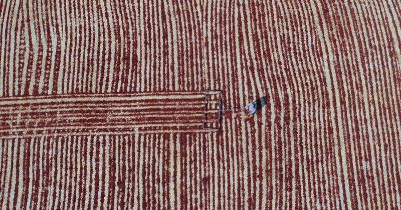 إنتاج الفلفل الأحمر المجفف في تركيا