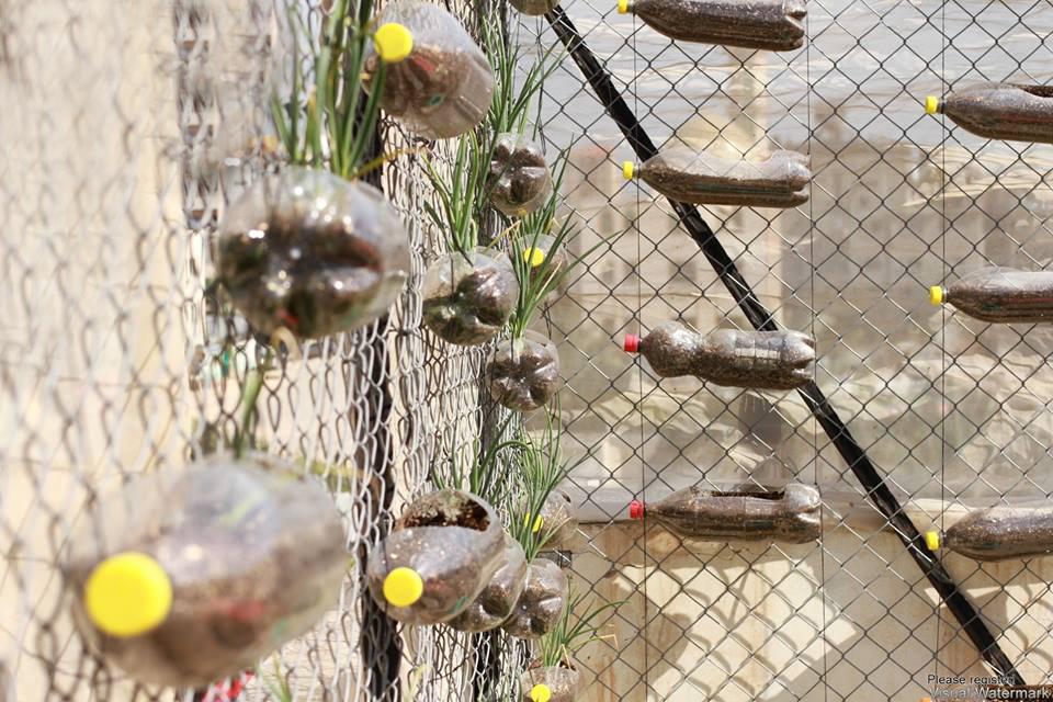 """أسطح منازل الفلسطينيين تتزيّن بـ الزراعة الحضريّة"""""""
