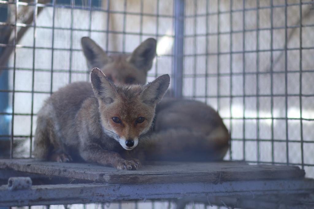 أول حديقة حيوان في القطاع مهددة بالإغلاق