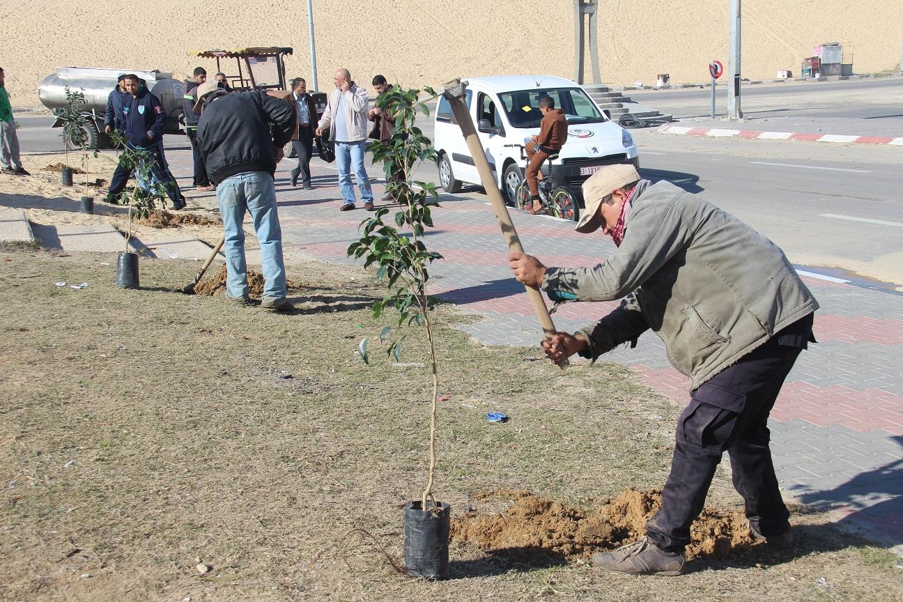 """بلدية رفح تبدأ حملة تشجير شارع """" الشهيد الزواري"""""""