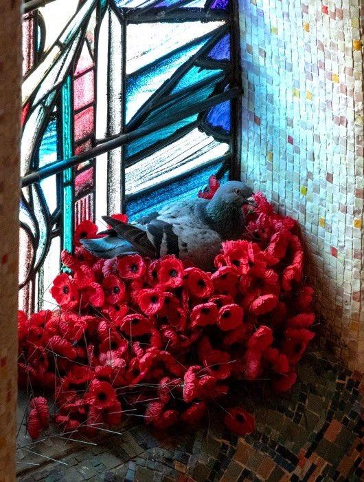 لص غير متوقع يسرق زهور قبر الجندي المجهول في أستراليا